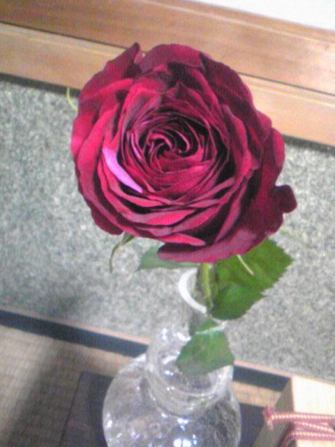 【ご感想】薔薇魔法・ハートウィング