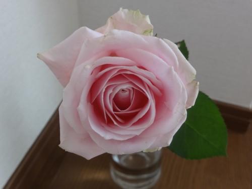「薔薇の魔法」ご感想を頂きました!