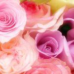 【ご感想】薔薇の魔法・オープンウイング1+2