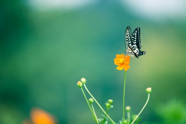 未来へ進む道が解らない、進めないと感じる時に試して欲しい シンプルな方法。